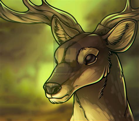 how to buck how to draw a deer step by step drawing guide by