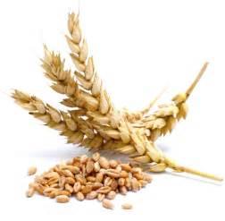 shelf for wheat and flour