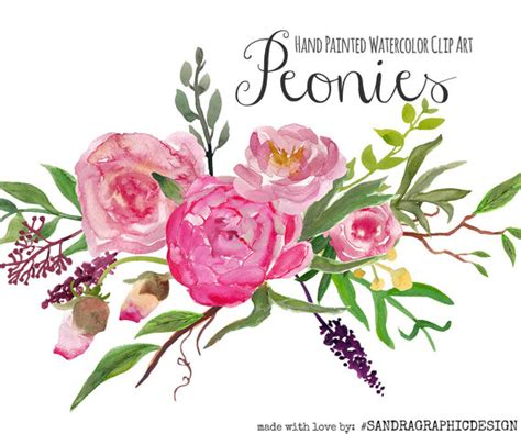 peony clipart floral clip quot peony clip quot painted watercolor