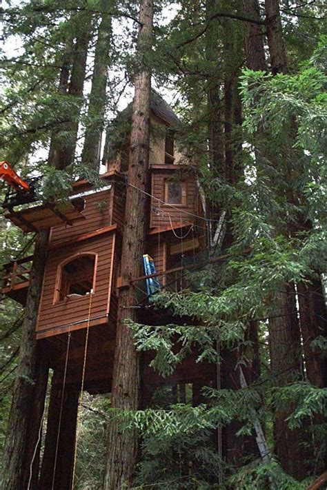 treehouse with swing tree house with swing treehouse pinterest