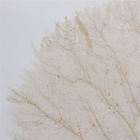 sea fans for sale giant cream sea fan for sale at 1stdibs