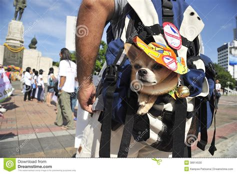 dog not eating thailand stock photo 202319899 shutterstock organized rally protect of dog eating editorial image