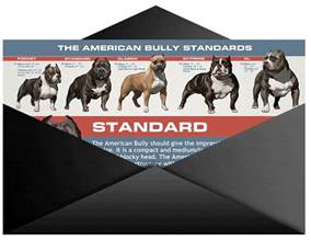 Why Do You Get Light Headed Skinny Rescue Pit Bull Takes Bully Max Amp Gets Ripped
