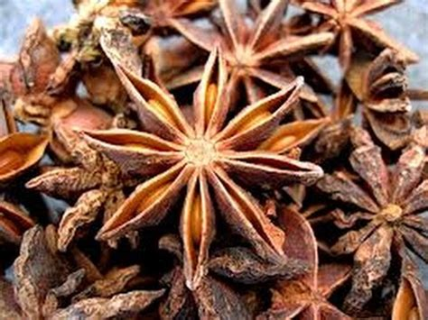 Pesanan Agan Anis 3 erva anis estrelado para que serve 11 3255 2005