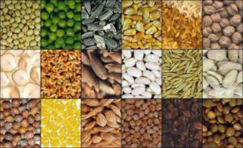 banche seme isole svalbard la mondiale seme agricolo