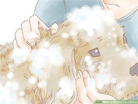 how to kill dog fleas in the house the best way to get rid of fleas in the house wikihow