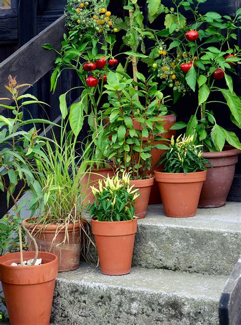 Gardening For Small Spaces Small Space Vegetable Gardening