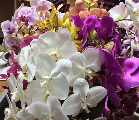 any design of flowers orchid bouquet meaning orchid bouquet love with pink