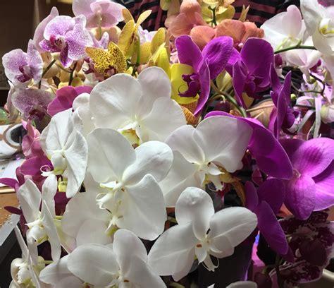 any design of flowers any design of flowers any design of flowers floral designs