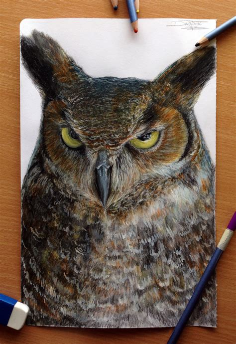 what color are owls owl colored pencil drawing