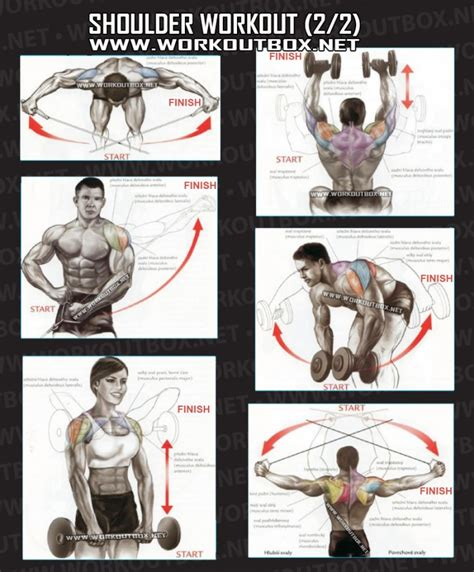 Shoulder Workout At Home by Shoulder Workouts For Images