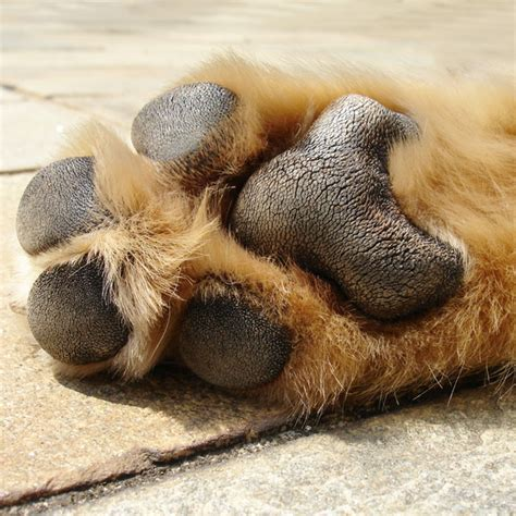puppy toes frito why your s paws smell like a popular corn chip