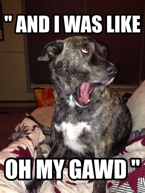 Funny Dog Meme - and i was like dr heckle