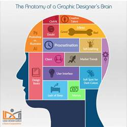 the anatomy of a graphic designer s brain visual ly