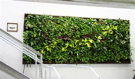 Interior Living Wall Plants Living Walls Aztec Plants