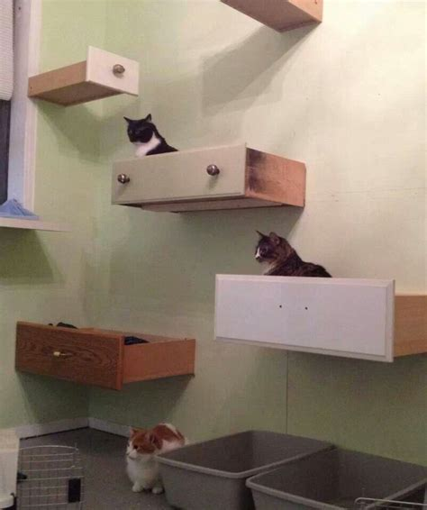 drawers as shelves drawers as cat quot shelves quot indoor outdoor cat ladders
