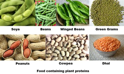 5 proteins found in the human proteins food groups and nutrients of proteins