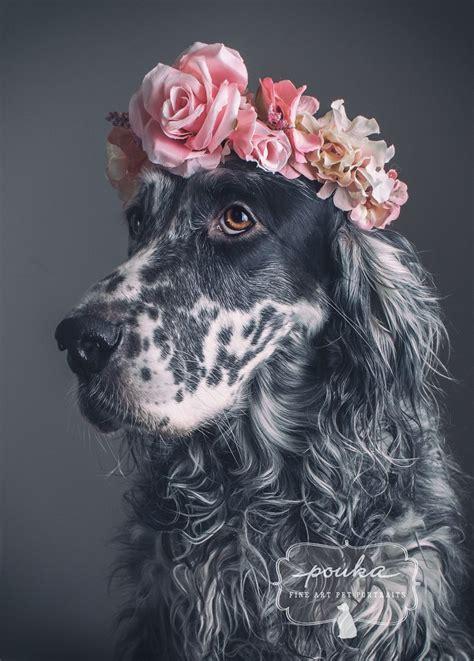 english setter dog collar beautiful girl a beautiful english setter with a flower