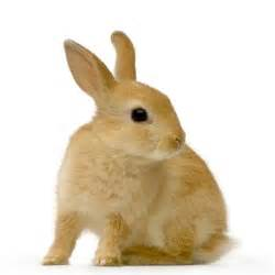 Small Animals Free To Home Kaniner Alt Om De Sociale Dyr
