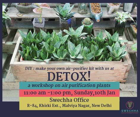 Detox Plants by Image Gallery Detox Plants