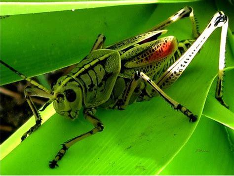 cricket symbolism meaning cricket spirit animal