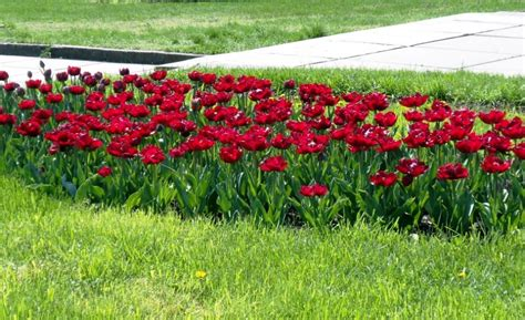 flower beds around house best flower beds ideas