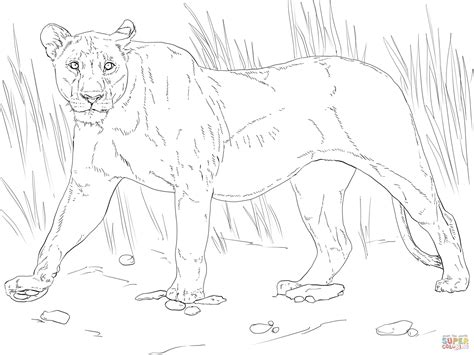 walking lioness coloring page free printable coloring pages