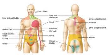 nociceptive pathways