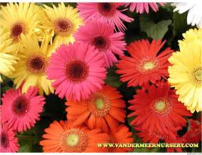 different types of flowers with pictures and names
