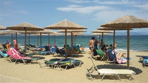 golden coast hotel bungalows picture of golden coast hotel bungalows nea makri