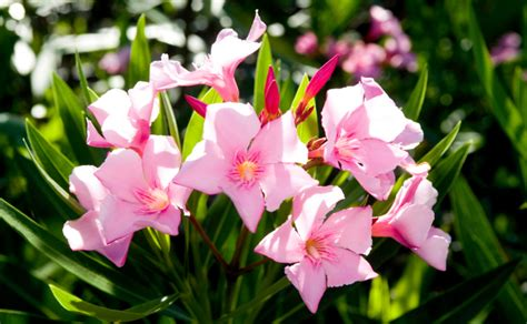 rooftop plants don s top six low maintenance plants burke s backyard