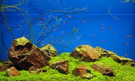 illuminazione per acquari d acqua dolce neon acquario acqua dolce casamia idea di immagine