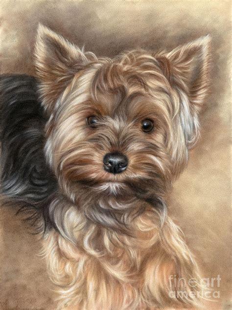 how to bathe a yorkie terrier terrier pastel by tobiasz stefaniak