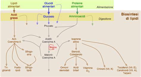 alimenti con lipidi metabolismo dei lipidi