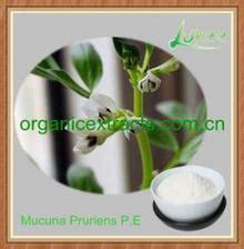 l dopa vegetables 99 l dopa mucuna pruriens p e for parkinson s disease