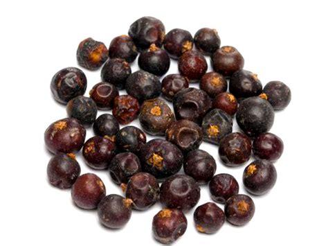 ginepro in cucina ginepro juniperus communis alimentipedia
