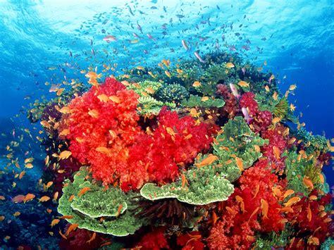 genesis nature coral reef habitats