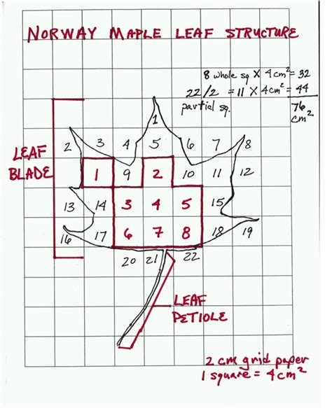 typical printable area surface area of a leaf teacher sheet science netlinks