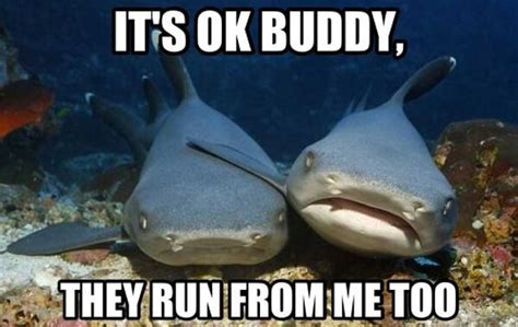 Fuck Buddy Meme - compassionate shark meme it s ok buddy they run from