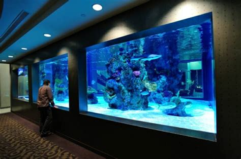 acrylic aquariums aquatic exhibits commercial and