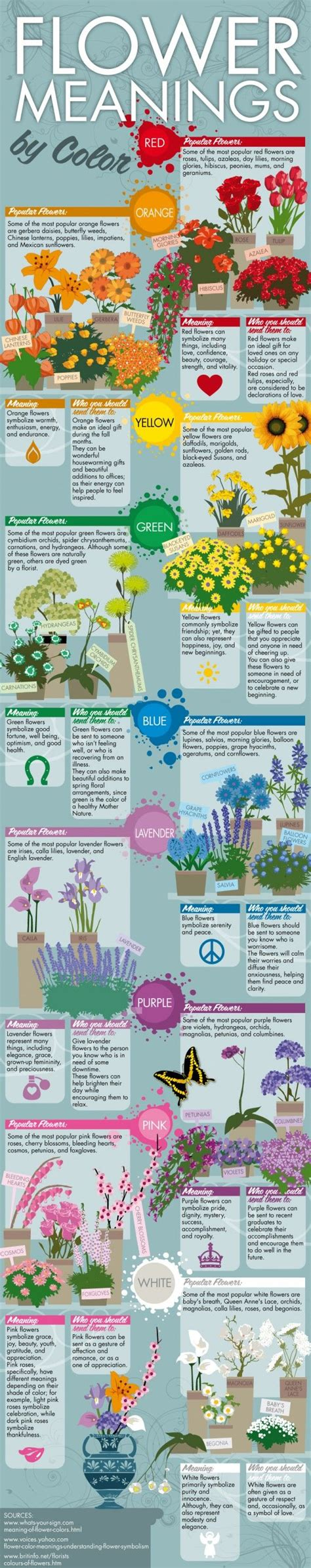 meaning of flower colors flower color meanings flowers