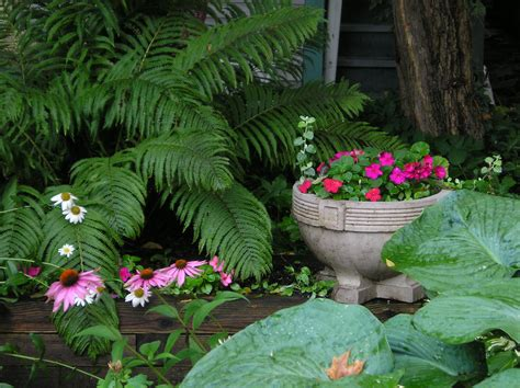 Flowers For Shade Garden Shade Garden Wikiwand