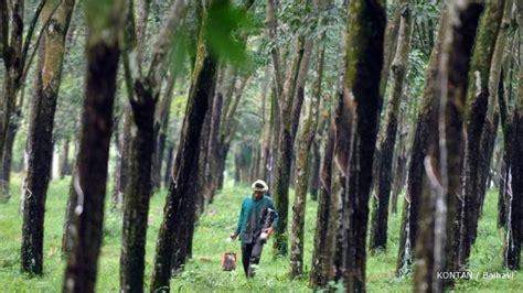 Perkebunan Karet by Kirana Megatara Rambah Bisnis Perkebunan Karet