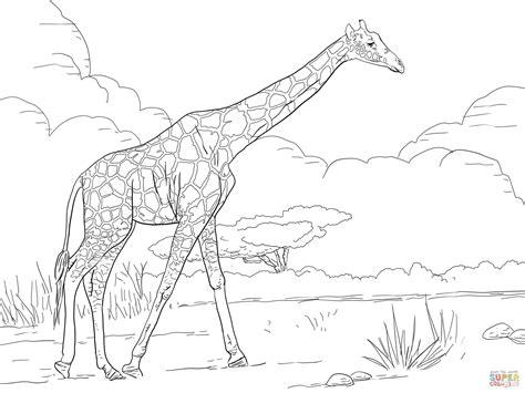 difficult giraffe coloring pages ausmalbild netzgiraffe ausmalbilder kostenlos zum