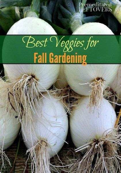best vegetables for fall gardening a 2 or 3 ideas hmmm pinterest fall vegetables and