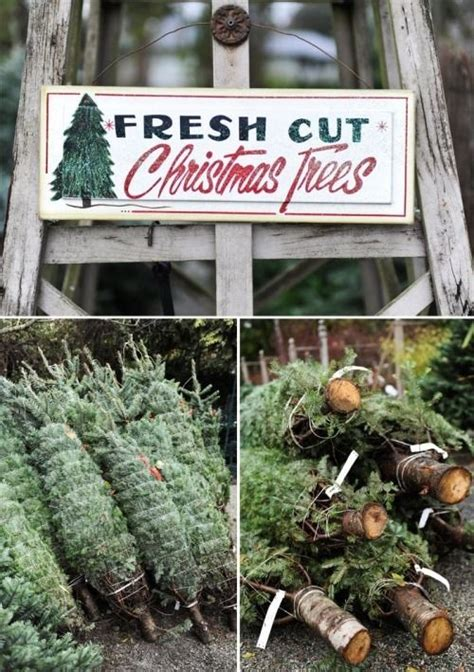 fresh cut christmas trees pictures photos and images for
