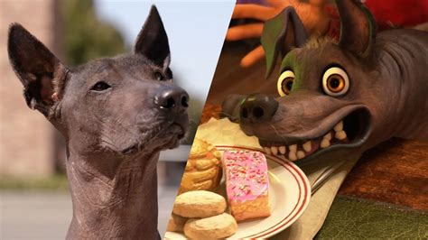 coco dog xolo tour of pixar animation studios national dog day