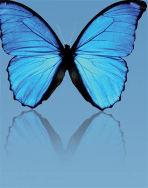 imagenes de mariposas negras grandes lista supersticiones sobre animales