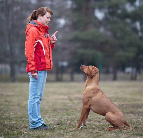 3 metode pelatihan basic agar anjing patuh okdogi