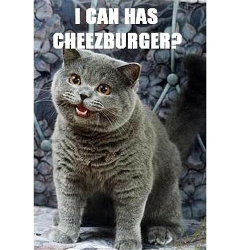 Cheezburger Meme - quick byte what is an internet meme osu extension ed tech